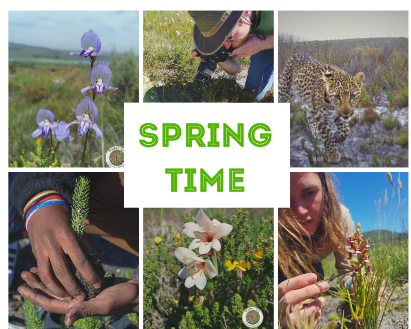 Spring Newsletter – What did spring bring?